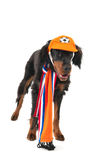 Dutch soccer dog Royalty Free Stock Image