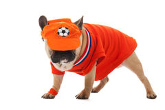 Dutch soccer dog Stock Photo