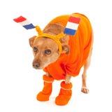 Dutch soccer supporter Stock Image