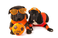 Dutch soccer supporters in orange Stock Photo