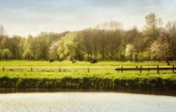 Dutch spring Royalty Free Stock Photos