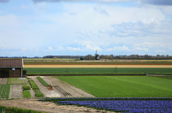Dutch spring Royalty Free Stock Images