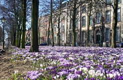 Dutch Spring Royalty Free Stock Photo