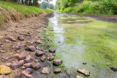 Dutch stream with low water level in summer. European brook with low water level in summer season royalty free stock images