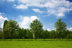 Dutch Summer landscape Royalty Free Stock Photos