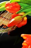 Dutch symbol. Beautiful fresh tulips, symbol of Holland, on the strings of a guitar, evoking the music and the beauty of nature Royalty Free Stock Photo