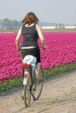 Dutch típico Fotografia de Stock