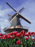 Dutch tipical view of mill and tulips Royalty Free Stock Photo