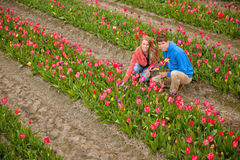 Dutch tourists are plucking tulips Royalty Free Stock Photos
