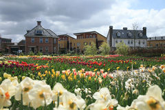 Dutch town by spring Royalty Free Stock Photography