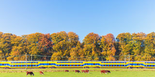 Dutch train passing colorful autumn trees Royalty Free Stock Photos
