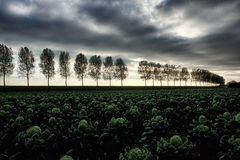 A Dutch tree-lined Landscape royalty free stock images
