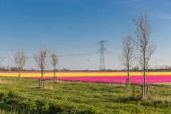 Dutch tulip field with wind turbines and power pylon royalty free stock photography