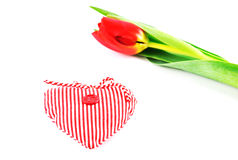 A dutch tulip and a small heart Stock Images