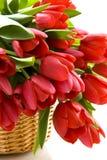 Dutch tulips Stock Photo