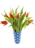 Dutch tulips Royalty Free Stock Photography