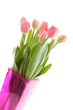 Dutch tulips in pink vase Stock Image
