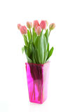 Dutch tulips in pink vase Stock Images