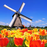 Dutch tulips and windmills. Traditional Dutch windmills with vibrant tulips in the foreground, The Netherlands Royalty Free Stock Photos