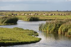 Dutch wetland with horses in National Park Oostvaardersplassen Royalty Free Stock Photography