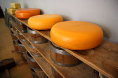 Dutch whole cheeses on a wooden shelve Stock Images