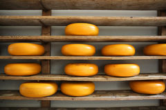 Dutch whole cheeses on wooden shelves Royalty Free Stock Image