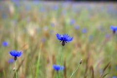 Dutch wild flowers Royalty Free Stock Photography