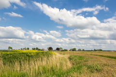 Dutch wild landscape rapeseed Royalty Free Stock Photos