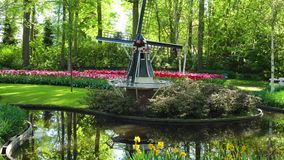 Dutch wind mills. Landscape with traditional Dutch windmills and blooming tulips flowers, Netherlands stock video
