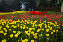 Free Dutch Windmill And Tulips Stock Photos - 29477243