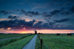 Dutch windmill and horses on pasture Royalty Free Stock Image