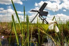 Dutch windmill in the landscape of the Dutch polder with marsh p Stock Photography