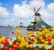 Dutch windmill over  tulips field Stock Images