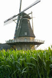 Dutch windmill, small village in North Brabant, mill and corn fi Royalty Free Stock Photo