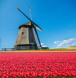 Dutch windmill and tulip field Stock Photography