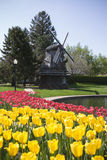 Dutch Windmill with Tulips Stock Images