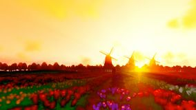 Dutch windmills and man ridding bike on a field with tulips against beautiful sunset, pastel style 4K. Hd video stock footage