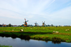 Dutch windmills of Netherlands Royalty Free Stock Photos