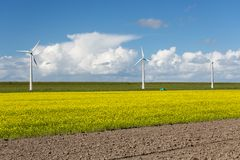 Dutch windturbines behind a yellow coleseed field. Dutch windturbines behind a big yellow coleseed field royalty free stock image