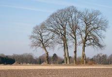 Dutch winter landscape. Dutch  farm landscape during wintertime Royalty Free Stock Image