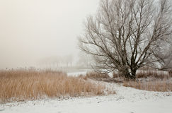 Dutch winter landscape in morning mist Royalty Free Stock Image
