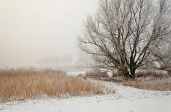 Dutch winter landscape in morning mist royalty free stock image