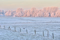 Dutch winter scene. The Netherlands was covered in ice for a few days. This is a scene from the Biesbosch Royalty Free Stock Photography
