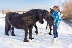Dutch woman petting black frisian horse in snow royalty free stock photos