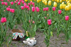 Dutch wooden shoes in tulip field Stock Image