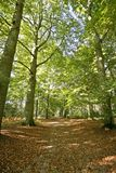 The dutch woods in the Netherlands. The dutch woods in fall in the Netherlands Stock Image