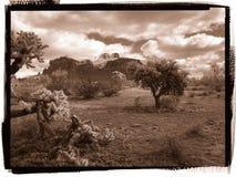 dutchman gubjący parkowy stan zdjęcie royalty free