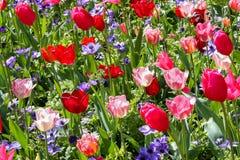 Dutchyaard in de lente Royalty-vrije Stock Afbeelding