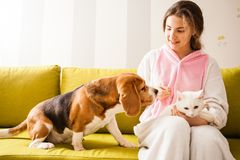 Pets love their mistress. Dutiful pets are sitting with the girl on the sofa Stock Photos
