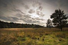 Dutsch landscape Den Treek Royalty Free Stock Photo
